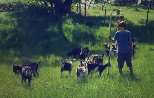 Noé et les chèvres